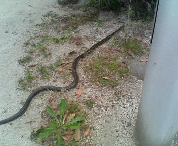 ヘビが出た!