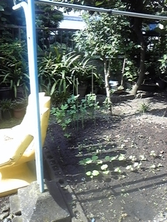 花壇から畑へ、、